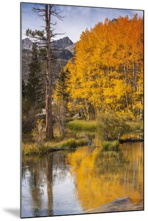Eastern Sierra, Bishop Creek, California Outlet and Fall Color-Michael Qualls-Mounted Photographic Print