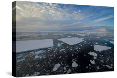 Antarctica, Near Adelaide Island. the Gullet. Ice Floes and Brash Ice-Inger Hogstrom-Stretched Canvas Print