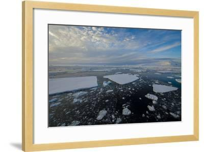 Antarctica, Near Adelaide Island. the Gullet. Ice Floes and Brash Ice-Inger Hogstrom-Framed Photographic Print
