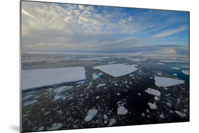 Antarctica, Near Adelaide Island. the Gullet. Ice Floes and Brash Ice-Inger Hogstrom-Mounted Photographic Print