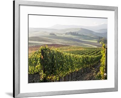 Europe, Italy, Tuscany. Autumn Vineyards in Bright Colors-Julie Eggers-Framed Photographic Print