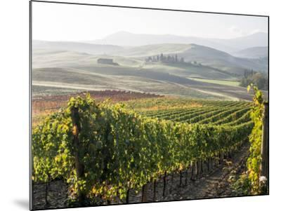 Europe, Italy, Tuscany. Autumn Vineyards in Bright Colors-Julie Eggers-Mounted Photographic Print