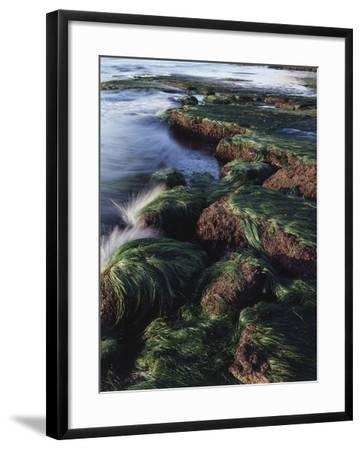 California, San Diego, Waves Crash on Eel Grass Covered Rocks-Christopher Talbot Frank-Framed Photographic Print
