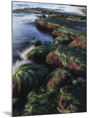 California, San Diego, Waves Crash on Eel Grass Covered Rocks-Christopher Talbot Frank-Mounted Photographic Print