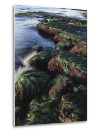 California, San Diego, Waves Crash on Eel Grass Covered Rocks-Christopher Talbot Frank-Metal Print