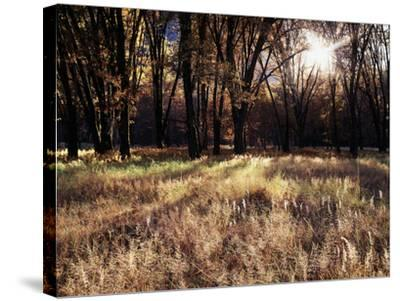 California, Sierra Nevada, Yosemite National Park, the Sunset over Fall Forest-Christopher Talbot Frank-Stretched Canvas Print