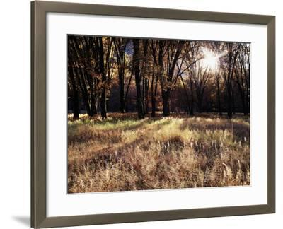 California, Sierra Nevada, Yosemite National Park, the Sunset over Fall Forest-Christopher Talbot Frank-Framed Photographic Print