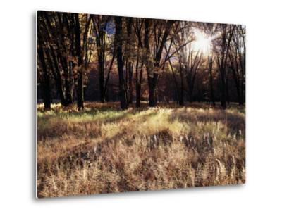 California, Sierra Nevada, Yosemite National Park, the Sunset over Fall Forest-Christopher Talbot Frank-Metal Print