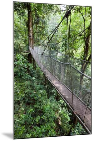 Suspension Bridge, Rainmaker Conservation Project, Costa Rica-Susan Degginger-Mounted Photographic Print