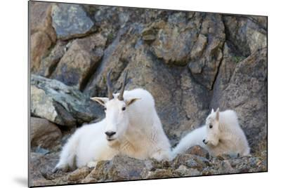 Wa, Alpine Lakes Wilderness, Ingalls Lake Area, Nanny Goat and Kid-Jamie And Judy Wild-Mounted Photographic Print