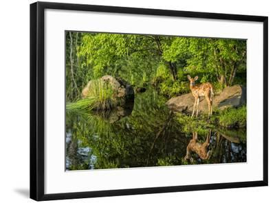 Minnesota, Sandstone, White Tailed Deer Fawn and Foliage-Rona Schwarz-Framed Photographic Print