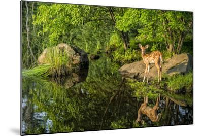 Minnesota, Sandstone, White Tailed Deer Fawn and Foliage-Rona Schwarz-Mounted Photographic Print