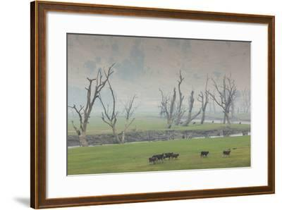 Australia, Victoria, Huon, Lake Hume with Forest Fire Smoke-Walter Bibikow-Framed Photographic Print