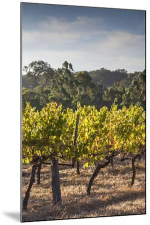 Southwest Australia, Margaret River Wine Region, Vineyard-Walter Bibikow-Mounted Photographic Print