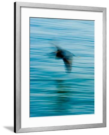 Egret Flying in Blur Caused by Slow Shutter Speed-James White-Framed Photographic Print