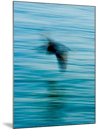 Egret Flying in Blur Caused by Slow Shutter Speed-James White-Mounted Photographic Print