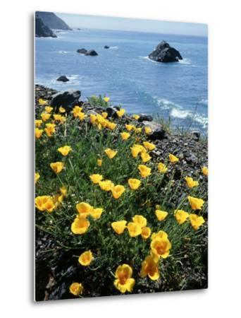 California, Big Sur Coast, Central Coast, California Poppy-Christopher Talbot Frank-Metal Print