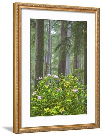 Redwood Trees and Rhododendrons in Forest-Terry Eggers-Framed Photographic Print