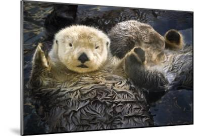 Two Sea Otters Holding Paws at Vancouver Aquarium in Vancouver, British Columbia Canada-Design Pics Inc-Mounted Photographic Print