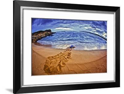 A Green Sea Turtle Entering Kawaloa Bay at Sunrise, Molokai Island-Richard Cooke-Framed Photographic Print