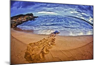 A Green Sea Turtle Entering Kawaloa Bay at Sunrise, Molokai Island-Richard Cooke-Mounted Photographic Print