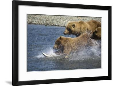 Mother Brown Bear and Her Cubs Chase Salmon at Mikfik Creek During Summer in Southwest Alaska-Design Pics Inc-Framed Photographic Print