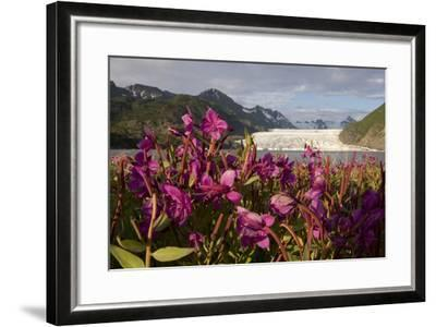Dwarf Fireweed Growing on the Shoreline of Grewingk Glacier Lake with Glacier in Background-Design Pics Inc-Framed Photographic Print