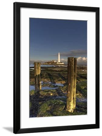 Wooden Posts and Lighthouse in Distance; Whitley Bay, Northumberland, England-Design Pics Inc-Framed Photographic Print