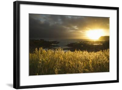 Sunlight Glowing at Sunset and Illuminating the Tall Grass at the Water's Edge-Design Pics Inc-Framed Photographic Print