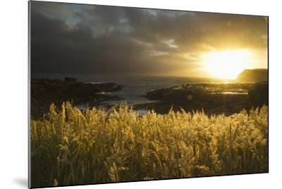 Sunlight Glowing at Sunset and Illuminating the Tall Grass at the Water's Edge-Design Pics Inc-Mounted Photographic Print