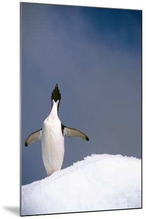 Portrait of Single Adelie Penguin Atop Iceberg South Atlantic Ocean Antarctica Summer-Design Pics Inc-Mounted Photographic Print