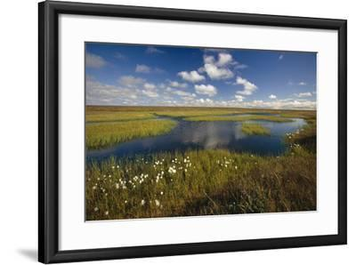 Arctic Tundra and Cotton Grass Summer Scenic North Slope Ak-Design Pics Inc-Framed Photographic Print