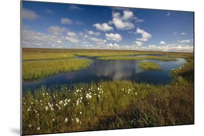 Arctic Tundra and Cotton Grass Summer Scenic North Slope Ak-Design Pics Inc-Mounted Photographic Print