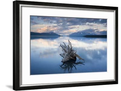 Driftwood Stump in Naknek Lake Katmai National Park Southwest Alaska Summer-Design Pics Inc-Framed Photographic Print