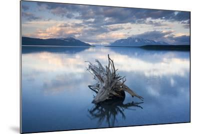 Driftwood Stump in Naknek Lake Katmai National Park Southwest Alaska Summer-Design Pics Inc-Mounted Photographic Print