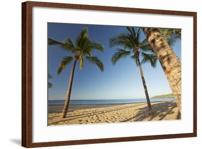 Hawaii, Lanai, Hulopoe Beach, Tall Palm Trees on a Beautiful Beach-Design Pics Inc-Framed Photographic Print