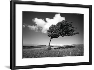 Wind-Swept Solitary Tree on Open Grassy Moorland-Design Pics Inc-Framed Photographic Print