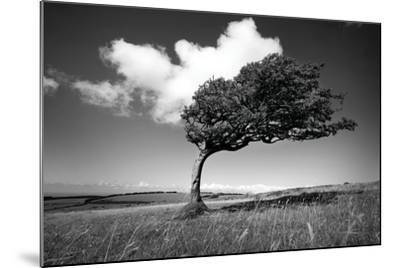 Wind-Swept Solitary Tree on Open Grassy Moorland-Design Pics Inc-Mounted Photographic Print