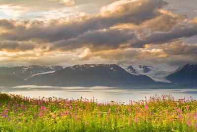 Field of Fireweed on Hill Overlooking Kachemak Bay and Grewingk Glacier-Design Pics Inc-Framed Photographic Print