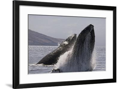 Hawaii-Design Pics Inc-Framed Photographic Print