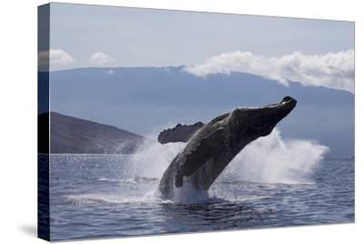 Hawaii-Design Pics Inc-Stretched Canvas Print