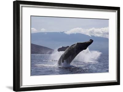 Hawaii-Design Pics Inc-Framed Photographic Print