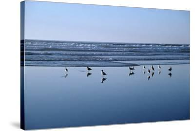 Seagulls Standing on the Shore as the Waves Roll In-Design Pics Inc-Stretched Canvas Print
