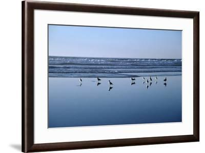 Seagulls Standing on the Shore as the Waves Roll In-Design Pics Inc-Framed Photographic Print