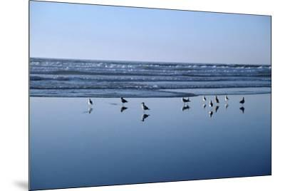 Seagulls Standing on the Shore as the Waves Roll In-Design Pics Inc-Mounted Photographic Print