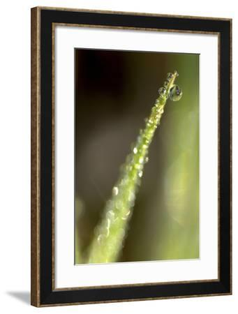 Close Up of Water Droplets on a Plant-Keith Ladzinski-Framed Photographic Print