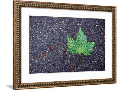 A Wet Green Leaf on the Street-Keith Ladzinski-Framed Photographic Print