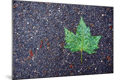 A Wet Green Leaf on the Street-Keith Ladzinski-Mounted Photographic Print