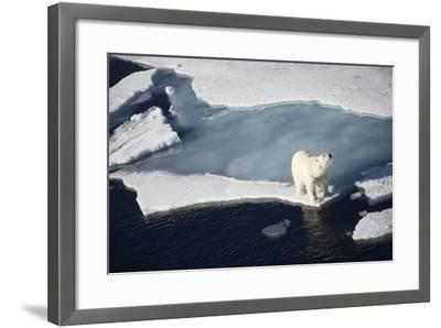 Polar Bear on Melting Sea Ice, High Angle View from Cruise Ship; Svalbard, Norway-Design Pics Inc-Framed Photographic Print
