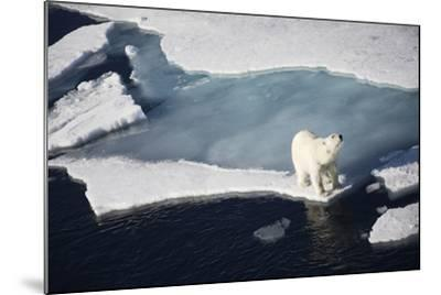 Polar Bear on Melting Sea Ice, High Angle View from Cruise Ship; Svalbard, Norway-Design Pics Inc-Mounted Photographic Print